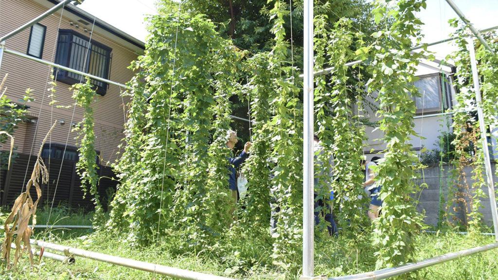 ふたこビール醸造所の畑